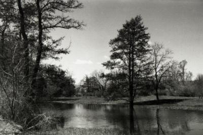 Sterling Pond looking north
