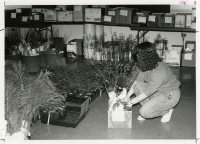 Arbor Day, woman packing plants at Plant Sale