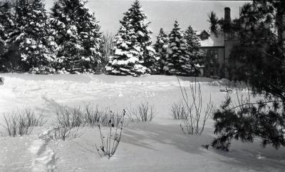 Footprints in snow near evergreens east of Morton residence