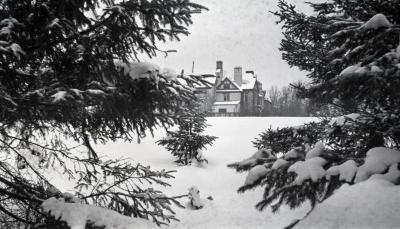 Evergreens in winter with partial view of Morton residence