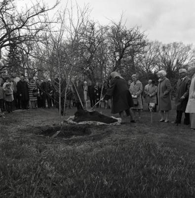 Arbor Day Centennial, afternoon program, crowd and J. Sterling Morton descendants watch as Suzette Morton Davidson shovels dirt over newly planted 'Winter King' hawthorn